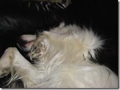Jade having a tummy rub