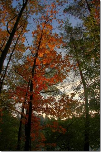 walldorf wald fall tree_2622 (683x1024)