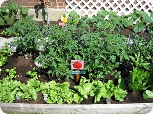 tomatobushesgrow