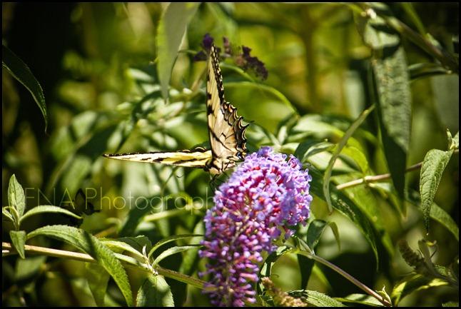 flower-butterfly-4