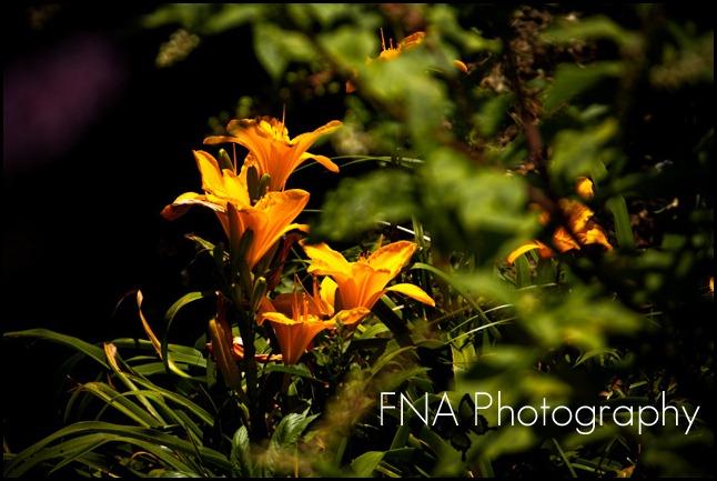 flower-butterfly-8