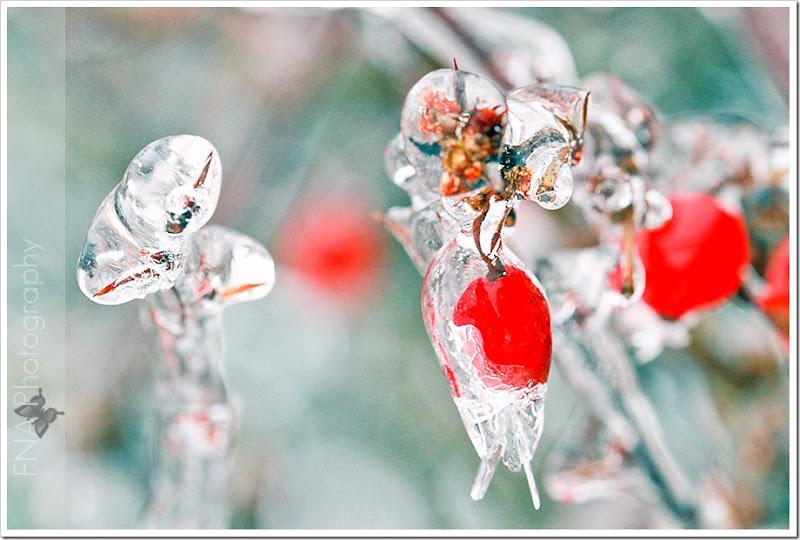 ice-macro-12