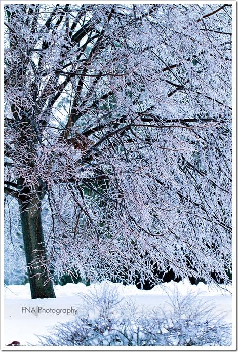 Feb-2-ice-14