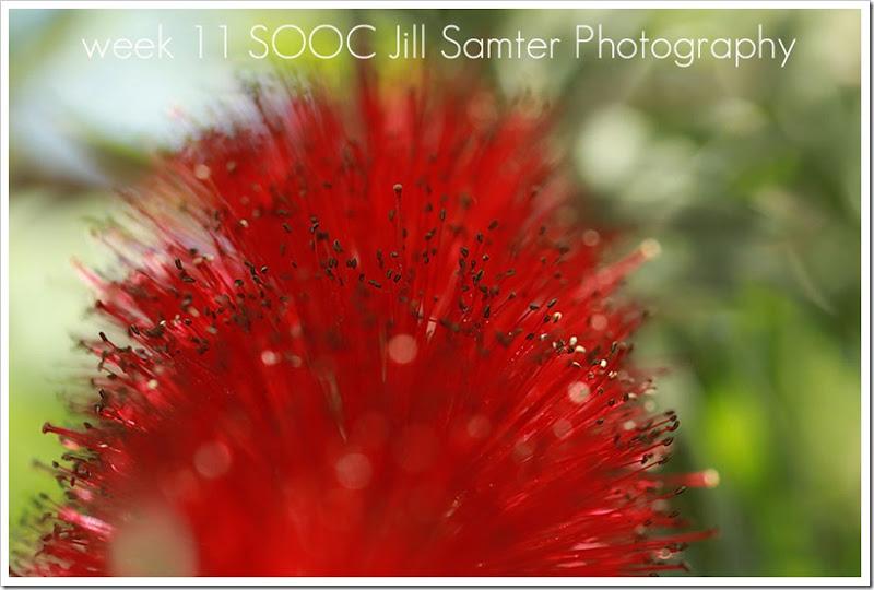 SOOC_0889
