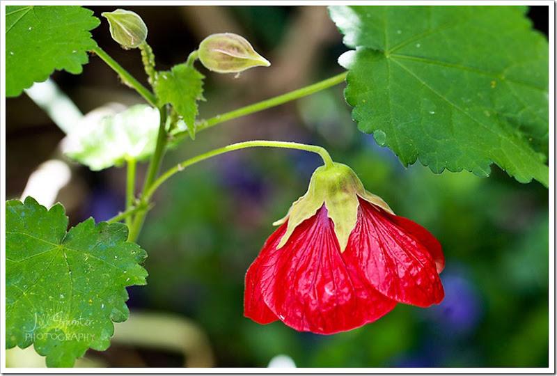 flowers-0581