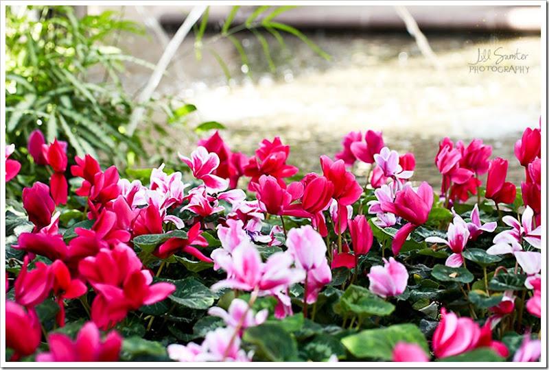 flowers-0684