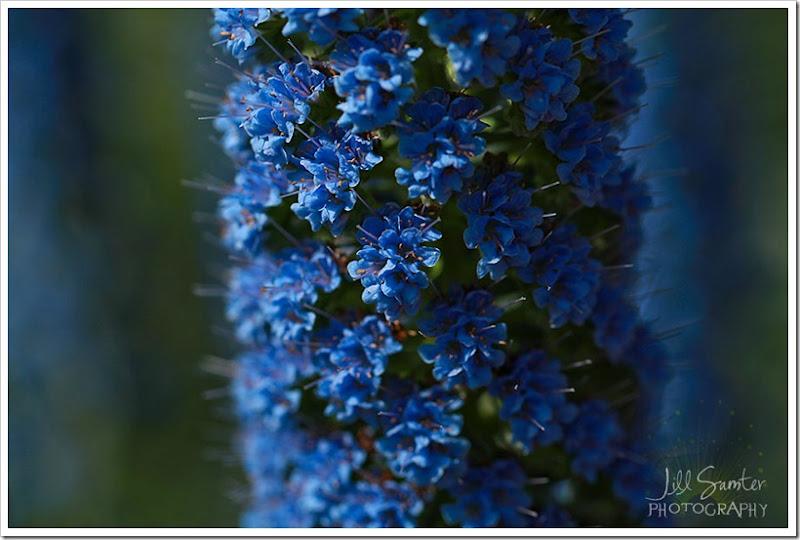 flowers-0711