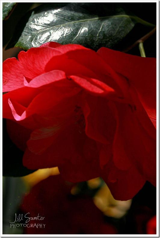 flowers-0669