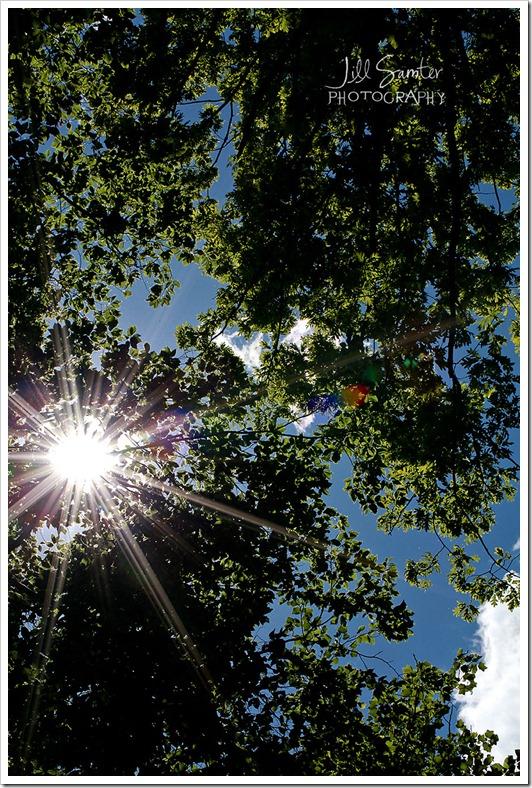 sunflare-3256