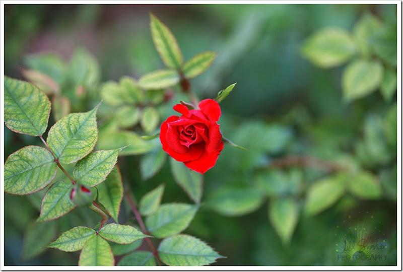 flowers-3208