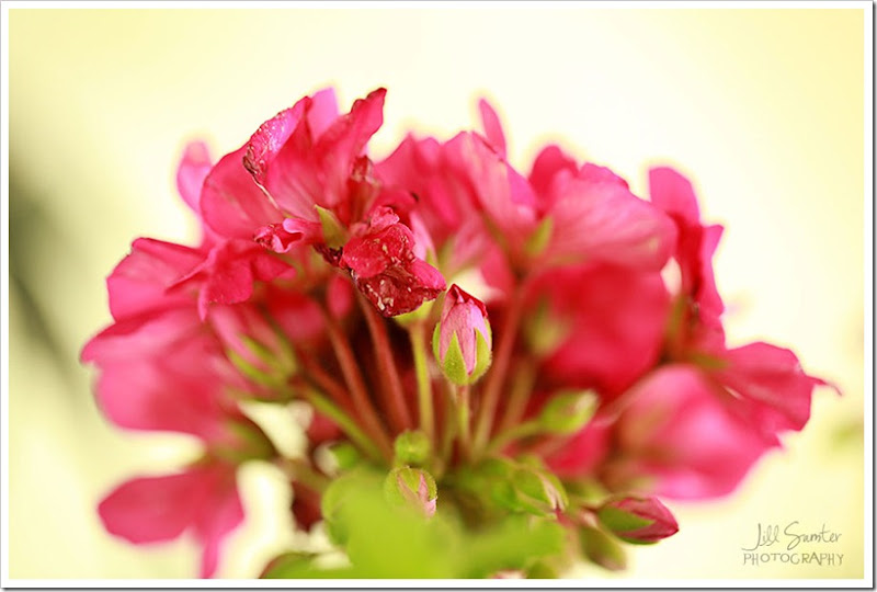 flowers-3213