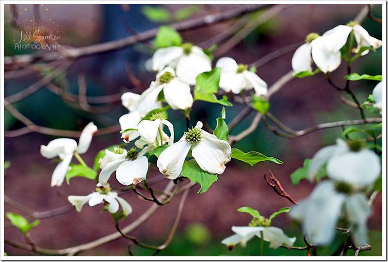 flowers-3216