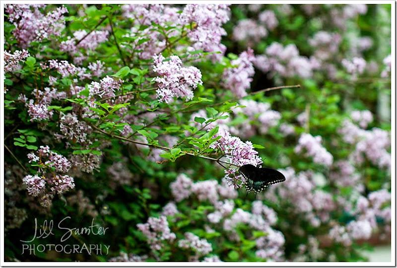 butterfly-3352