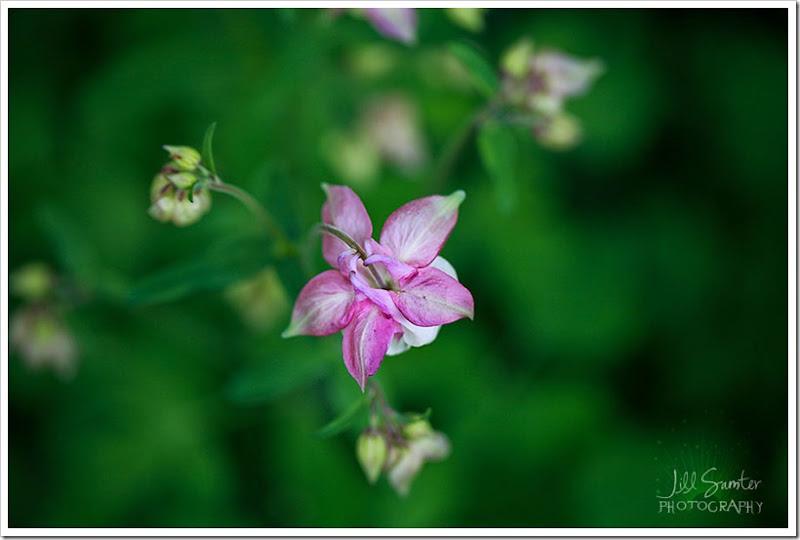 flowers-3356