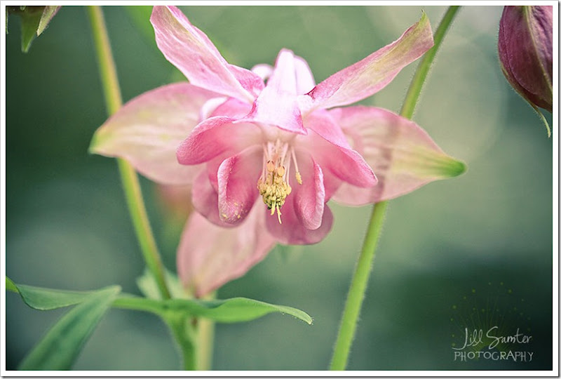 flowers-3399