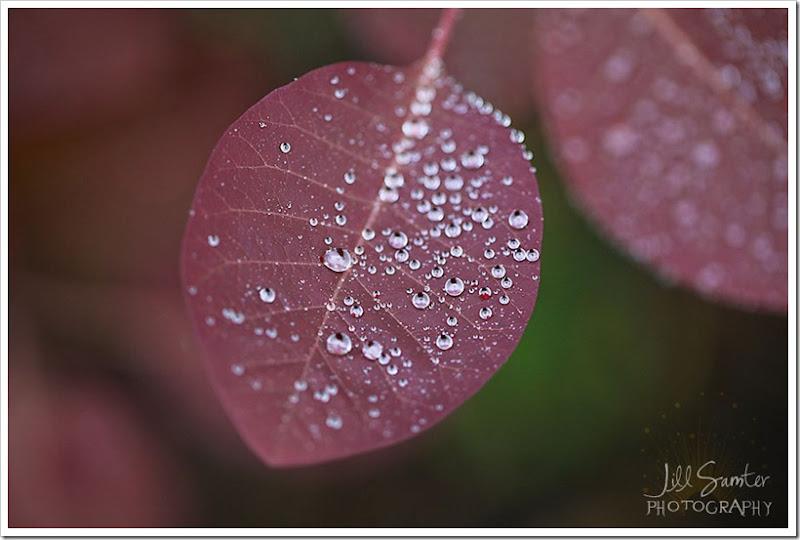 raindrops-4066