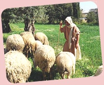 Nazareth.Shepherd