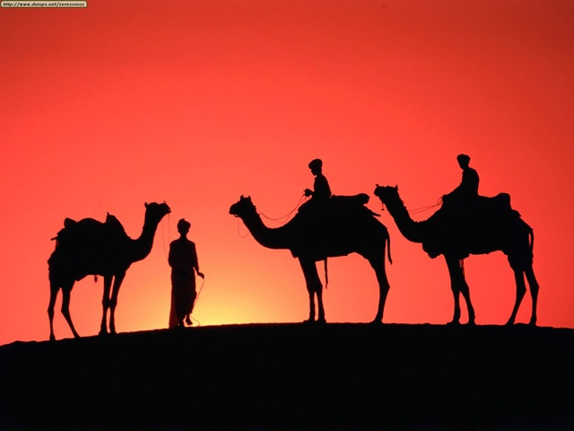 [camellos 3[4].jpg]