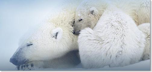 cast_polarbear_