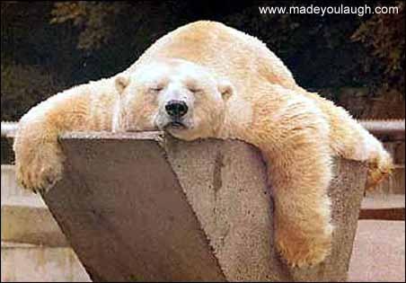 [tired_bear[3].jpg]