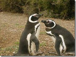pingwui2