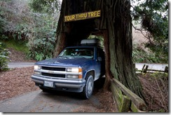 CA - drive through Tree