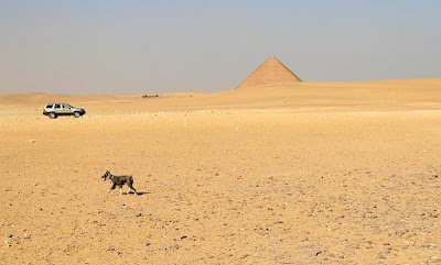 Holly the dog heads back to the car after playing at the pyramids at Dahshur, Egypt.