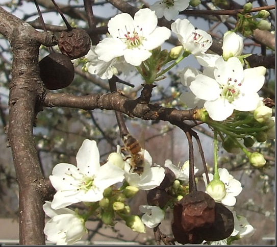 Bees and nature 022