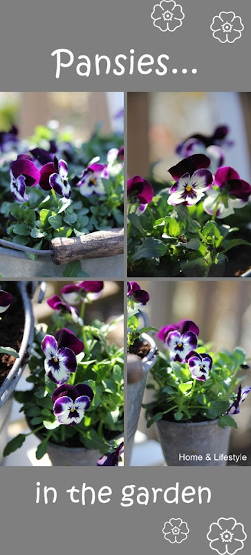Collage pansies-a