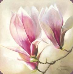 Annemarie-Peter-Jaumann-Magnolia-Liliflora-148080