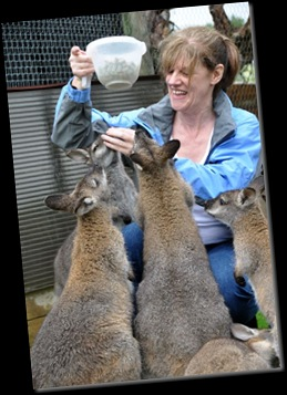 Denise Gormer &amp; Wallabies (re-sized)