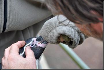 Vet visit Sept 10 (resized) Check Penguin's eye - Copy