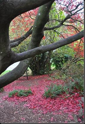 Autumn leaves at Paignton