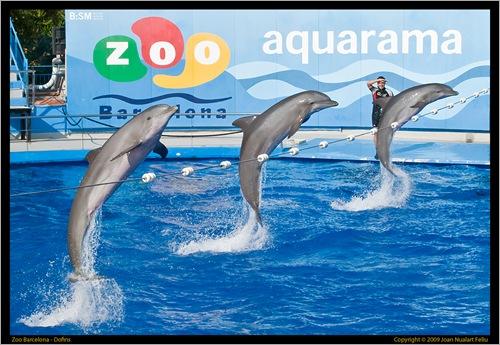 Dofins en perfecte harmonia
