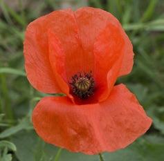 First_flower