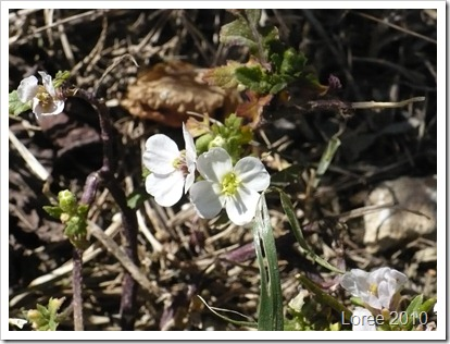 Wild flowers 009