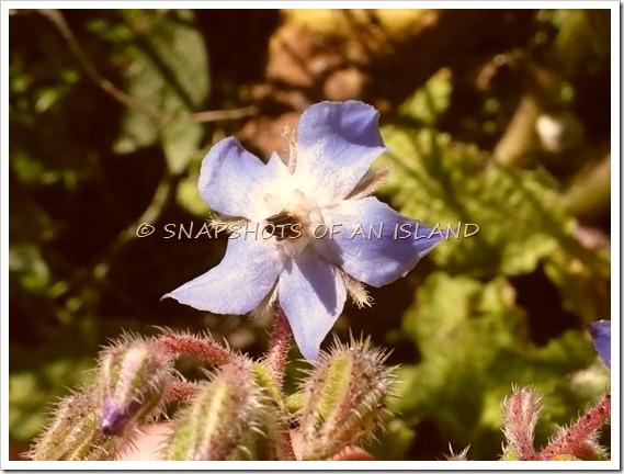 Wild flowers 002