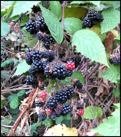 Oregon Sept 08 105-crop v1