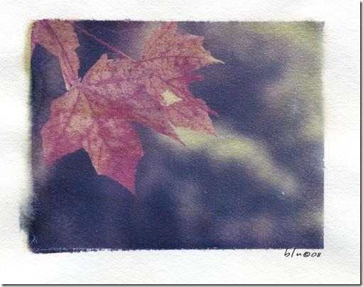 Leafy Transfer