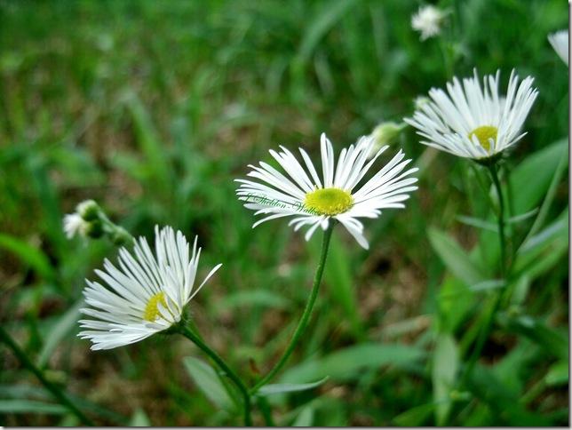 mystery flower 1