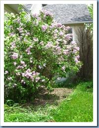 20110523_garden_005