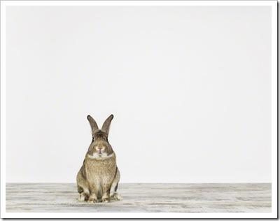 BunnyNo1