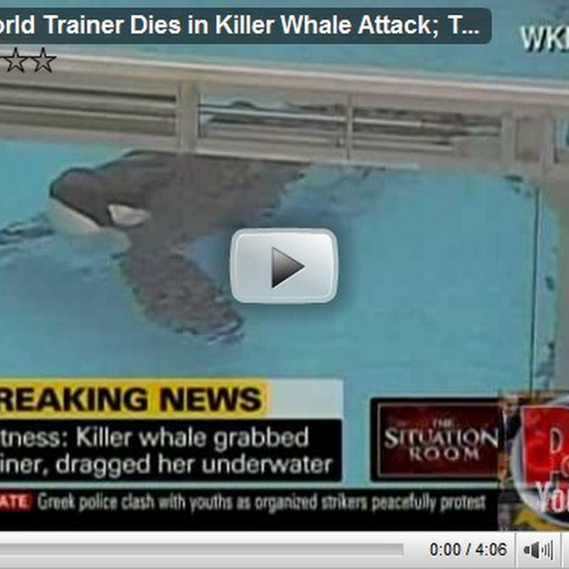 Video de Orca mata a su entrenadora