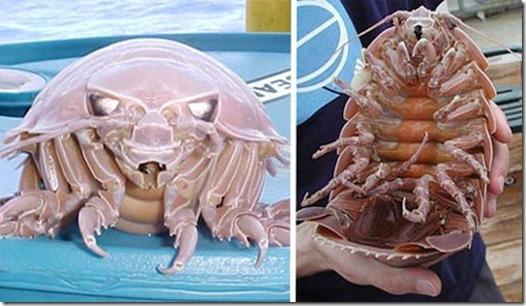 los animales mas raros del mundo - marinos y terrestres