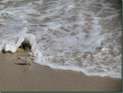 Seabird avoiding the waves