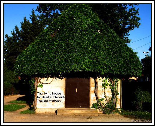 Živa kuća - haiga (Living house)
