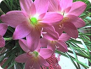 flores24