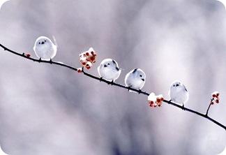 white_birds