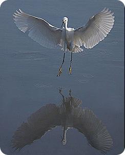 Jack_Wolf_Landing_mirror