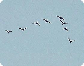 bird_v